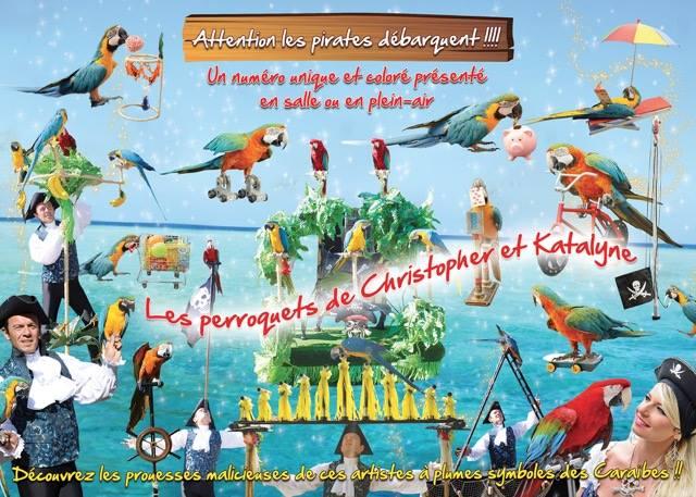 Perroquets artistes
