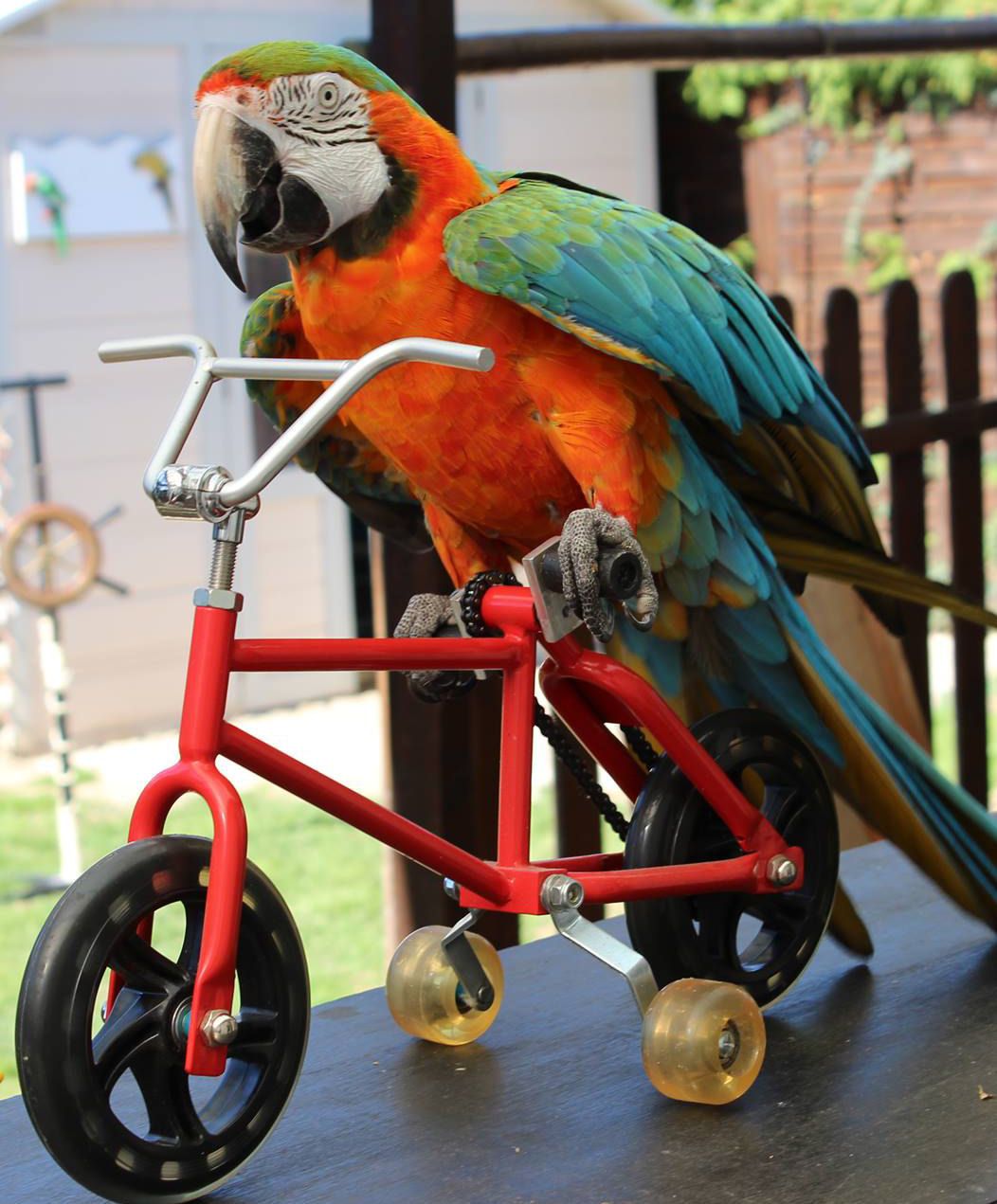 Spectacle de perroquets